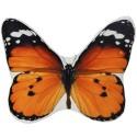 Almofada Borboleta Orange Black